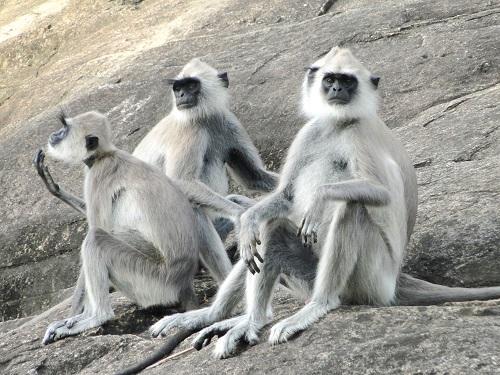 Sri Lanka tourist attractions