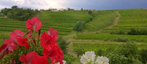 Kabaj Morel, Kabaj Morel wine, Kabaj Morel homestead, Goriška Brda, Goriška Brda Slovenia, Brda Slovenia, Slovenian wine, Slovenian wines, Travel to Slovenia, traveling to Slovenia, Slovenia Travel, vineyards in Slovenia, wine cellar
