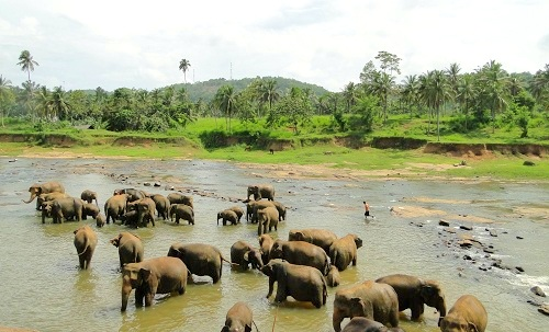 Kandy tourist attractions, things to do in Kandy
