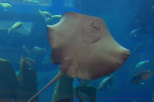 dubai aquarium, dubai mall aquarium, dubai top attractions