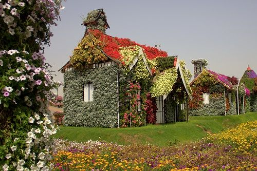 miracle garden in dubai, dubai tourist attraction, miracle gardens dubai