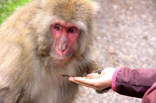 macaque monkeys villach austria