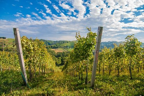Pomurje, traveling to Slovenia, Slovenia travel, Slovenia travel blog, visiting Slovenia