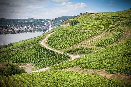 Things to do in Rudesheim