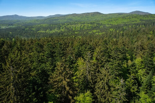 Bavarian Forest, Bavarian Forest National Park, Bavarian Forest Germany